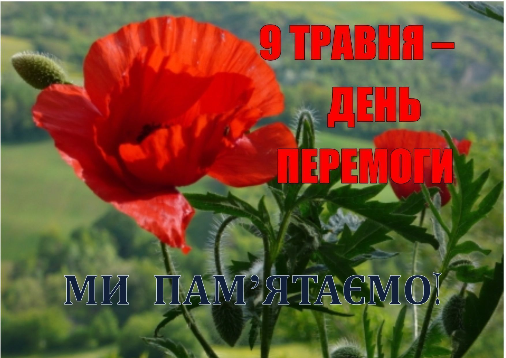 Заходи до Дня Перемоги у Свесі та Ямполі
